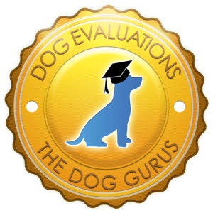 dog-evaluations-icon