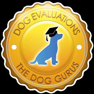 dog-evaluations-icon